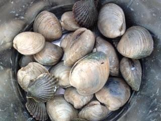 clam_bake2.jpg