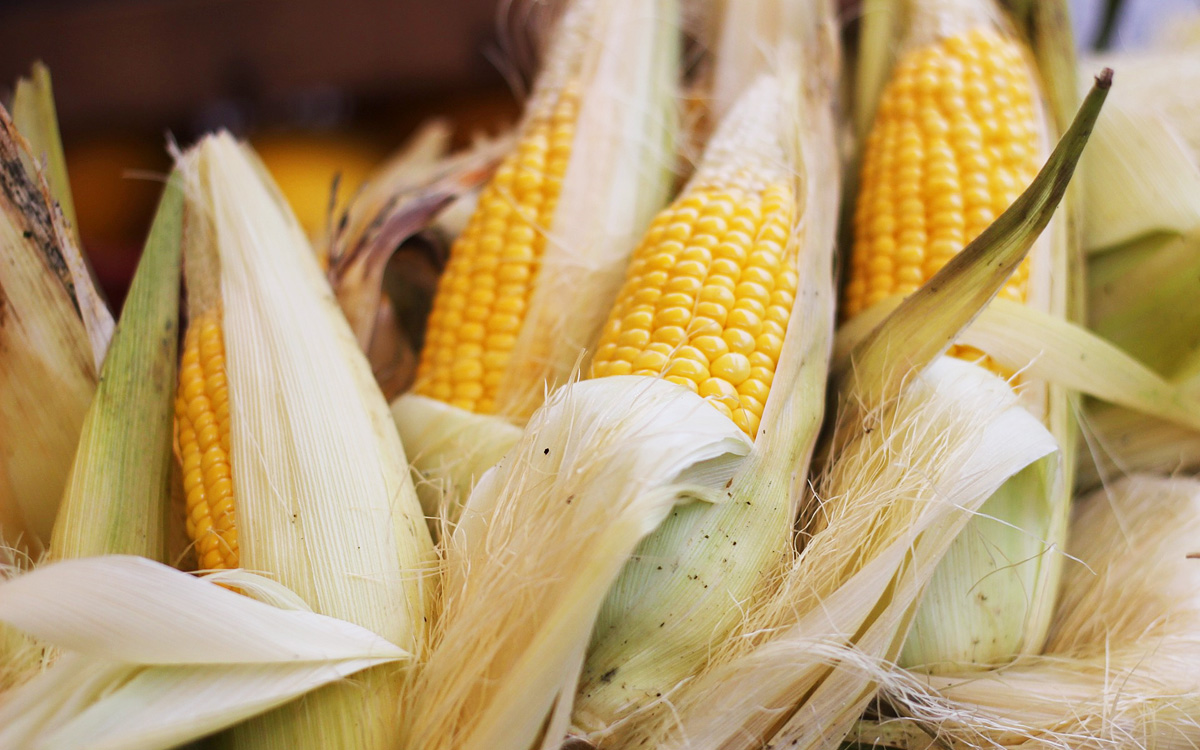 8 Tips for Buying and Storing Corn - Barbecuebible.com