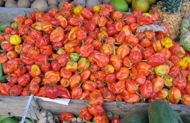 Turn Up the Heat with Chile Peppers! 15 Hot Facts & Grilling Tips
