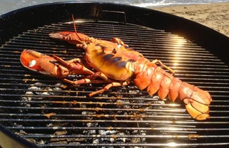 lobster-1-450