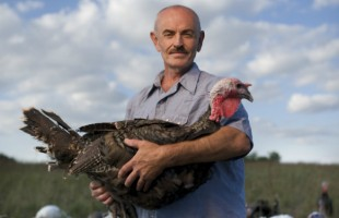 Enter for a Chance to Win a Heritage Turkey for Thanksgiving