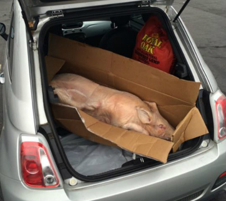whole pig 1-450