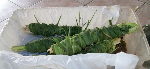 Lemongrass bundles