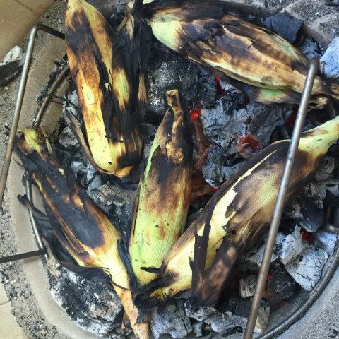 Corn in the embers