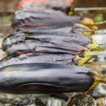 Charred Eggplants